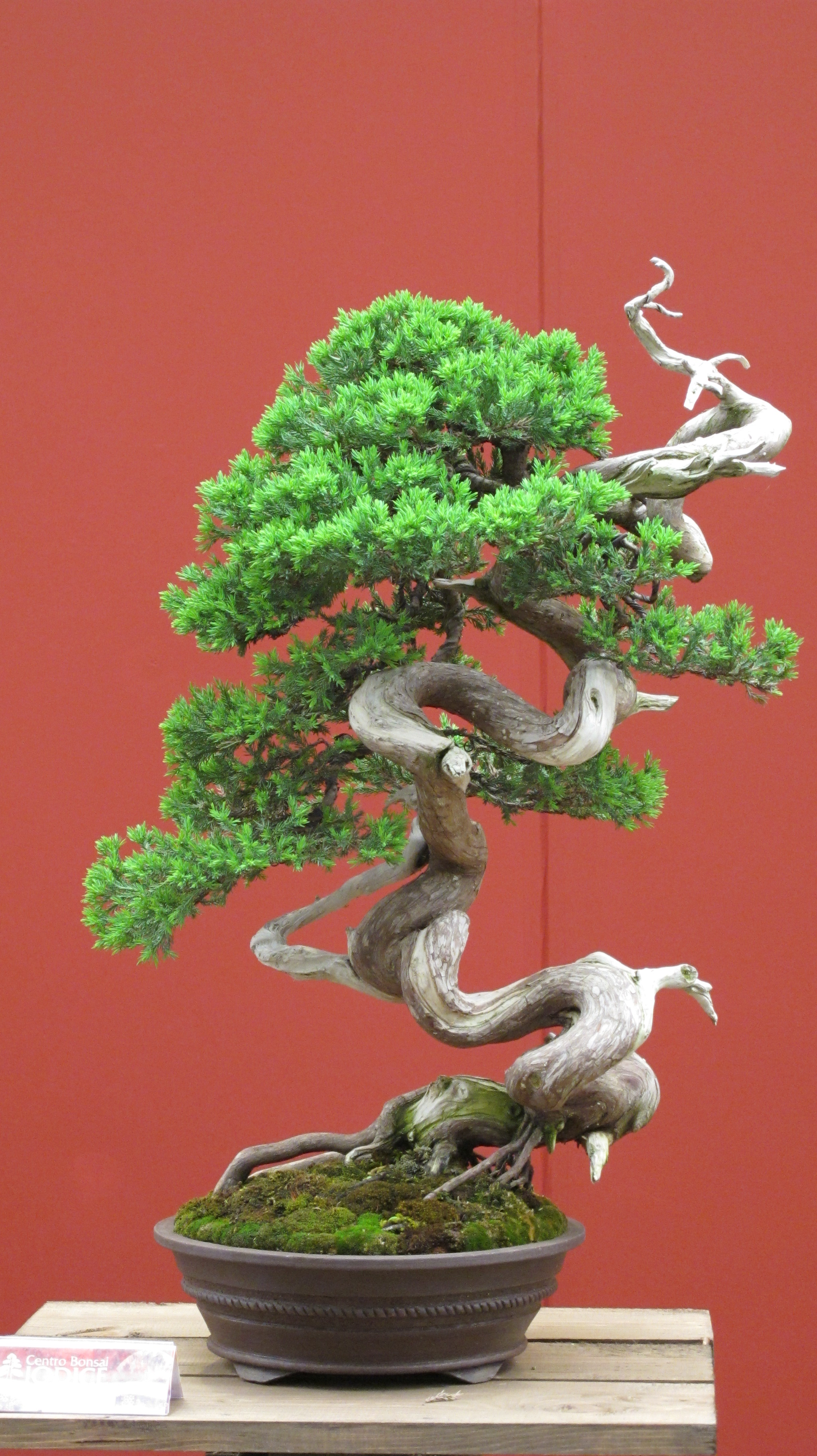 how to make bonsai soil at home in india