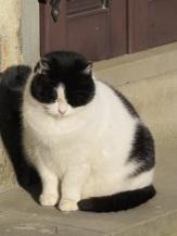 20130128-033334.jpgVergemoli cat