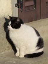 20130128-033359.jpgVergemoli cat