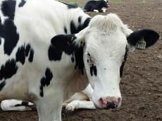 Scenic Rim Dairy