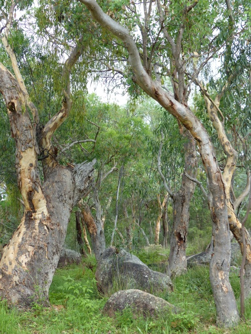 Granite Belt Queensland