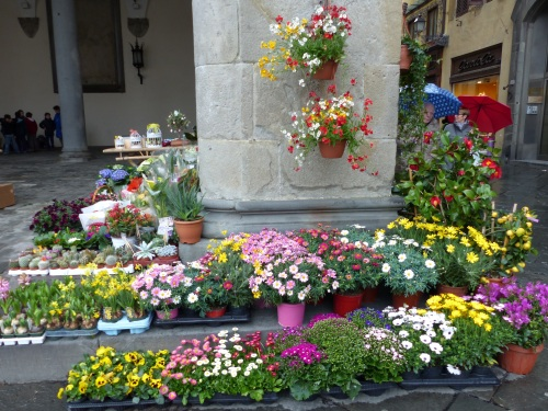 Lucca flowers
