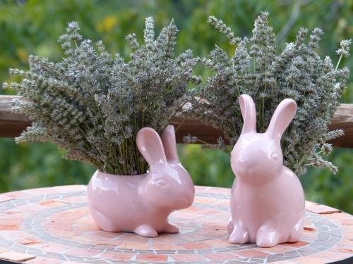 Casa Debbio lavender