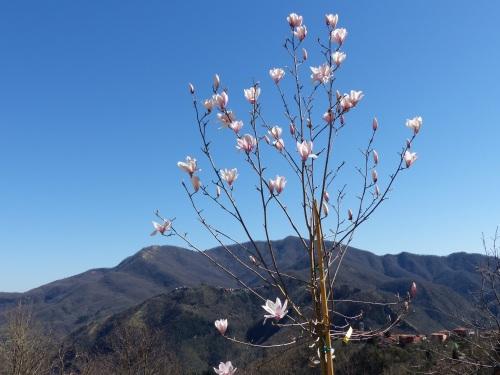 Casa Debbio magnolia