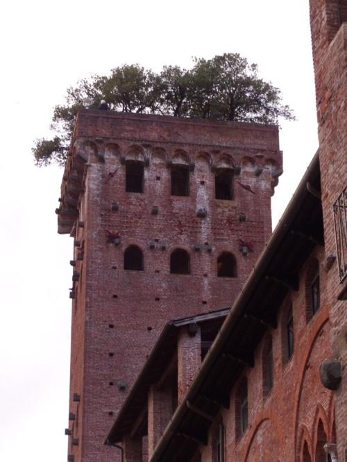 Guinigi tower Lucca