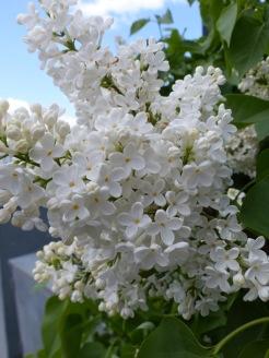 Helsinki flowers