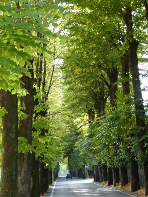 Tiglio trees BdL