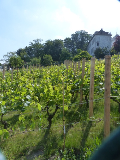 Vineyard Paris